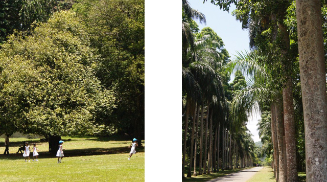 Barts-Boekje-botanic gardens sri lanka