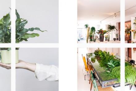 Barts-Boekje-the plant agency