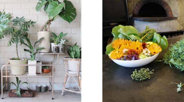 Grow an edible balcony @ Hoxton Amsterdam