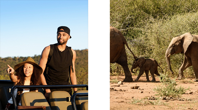 lionkingafrika