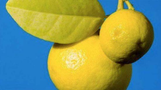 Le Bleu Citron Amsterdam
