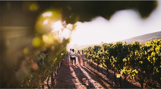 Barts-Boekje-winery