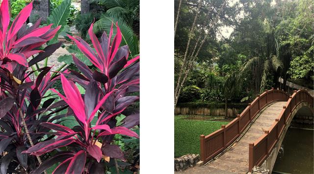Barts-Boekje-botanische tuin