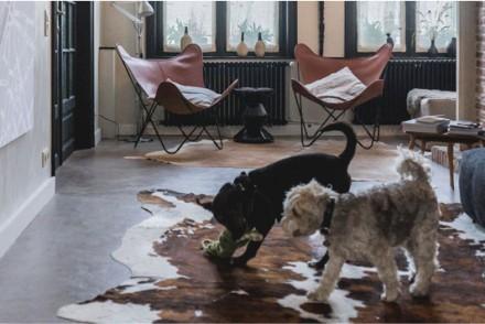 Barts-Boekje- the dog house