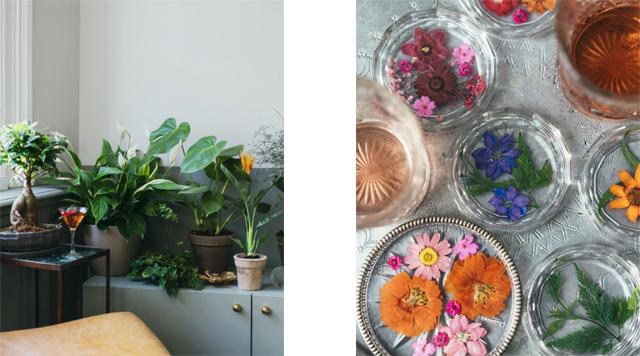 Barts-Boekje- mooi wat planten doen