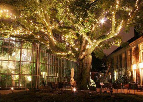 Hortus by Light: Winter Hortus Botanicus Amsterdam