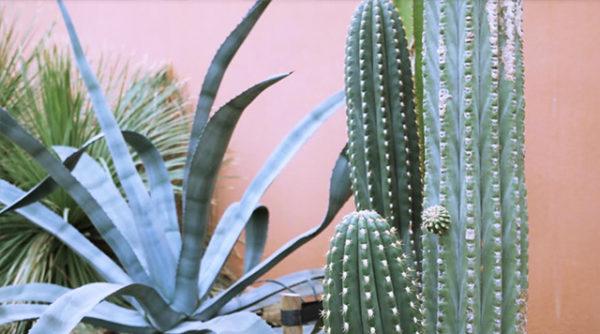 Sprinklr X Hortus Botanicus