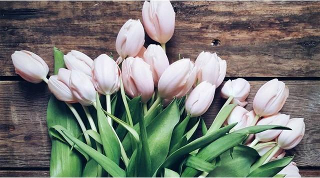 Barts-Boekje-Tulpen