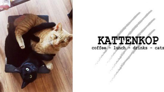 Bijna open: Kattenkop Café Delft