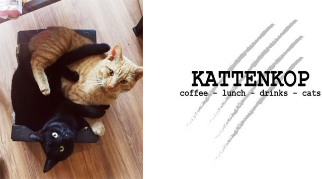 Barts-Boekje - kattenkopcafe