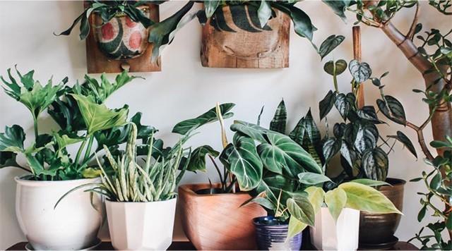 Barts-Boekje-planten