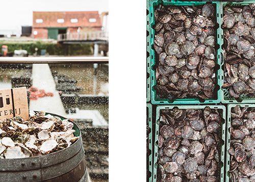 4 x Kraakverse vis eten in Nederland en net over de grens