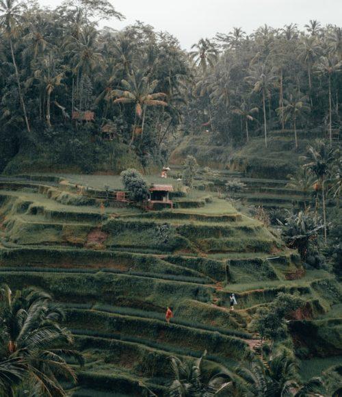 Bali - Barts Boekje