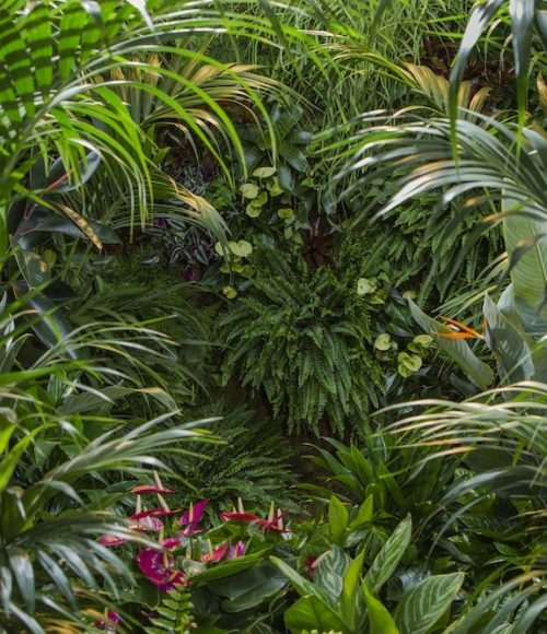 Badderen in het groen in de Plant Bathing Studio