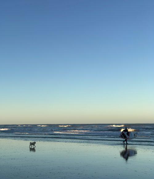 het hele jaar door slapen aan het strand: Boulevard 5 Zandvoort (en hondjes zijn welkom!)