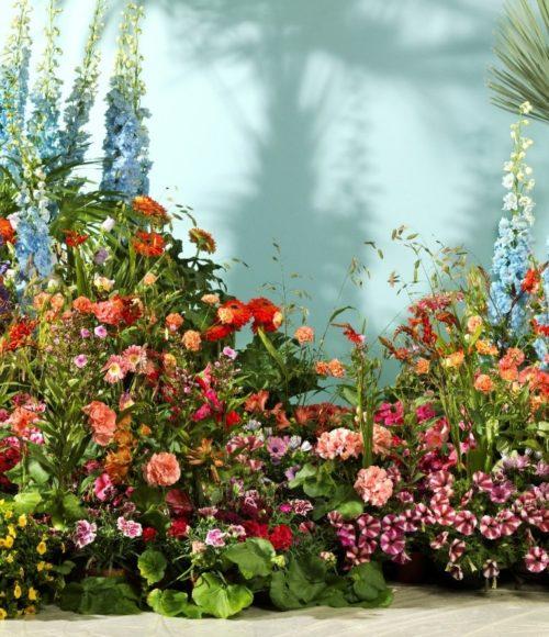 Kleur! Vrolijk je balkon of tuin op met Zomerbloeiers