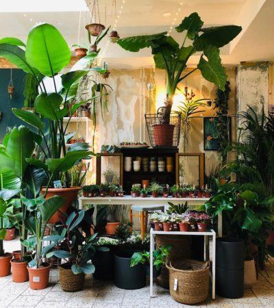 filya indoor garden den haag barts boekje