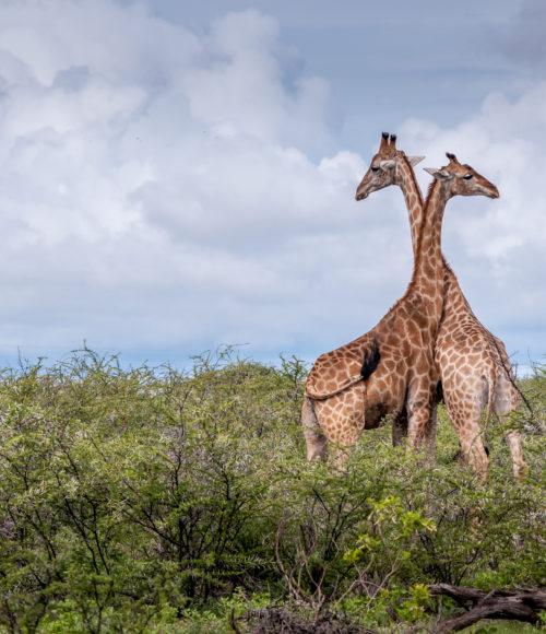 Honeymoonbestemming: Kenia