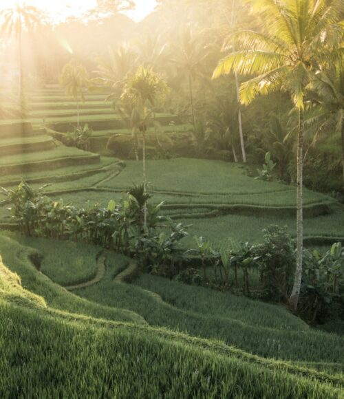 Barts Bali lijst: de hotspots waar je wil zijn, zodra we weer mogen.