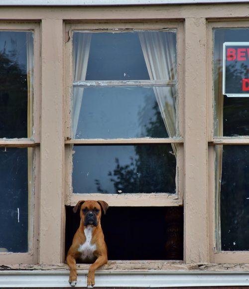 honden welkom - barts boekje