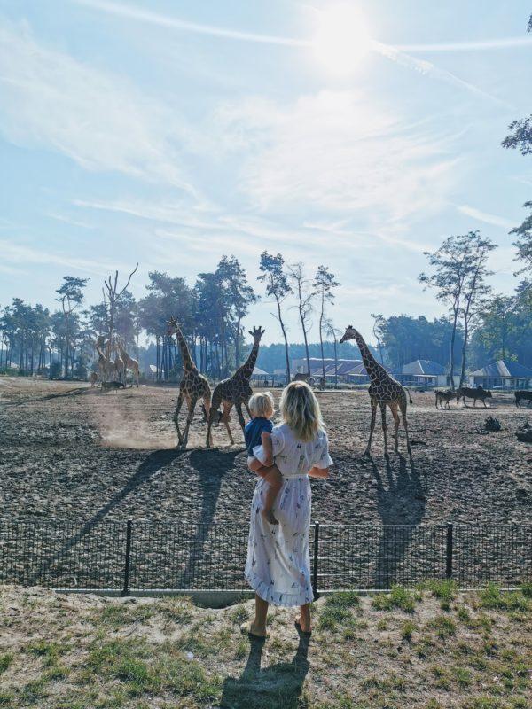 Op safari voor beginners: logeren bij de Beekse Bergen is bijna on-Nederlands leuk