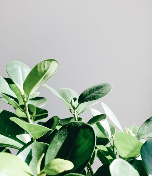 Plantfulness helpt je goed te voelen: yoga, meditatie en planten (+ winnen!)