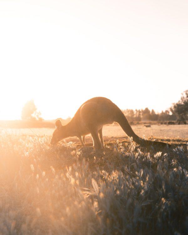 Live vanuit Australie: Wat kun je doen? Maar ook: waar gaan we heen?