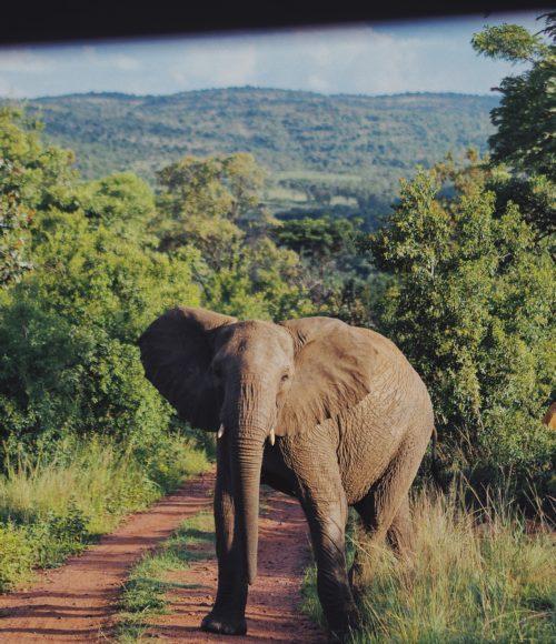 De ultieme game lodge droom: Mhondoro resort in Welgevonden, Zuid Afrika