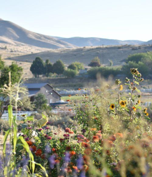 Barts Buiten: Een mooie 'wilde' tuin, hoe doe je dat?