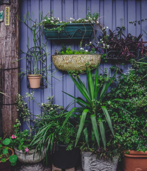 Barts Buiten: Barts bovenstebeste tuintips deel 2: de siertuin (ook voor kleine tuinen)