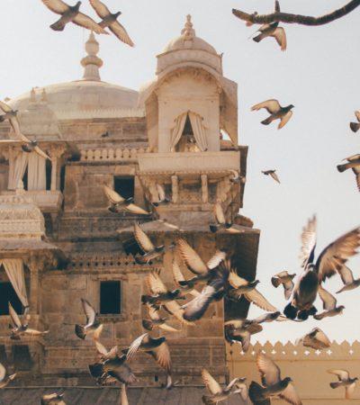 India - Barts Boekje
