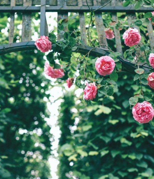 rozen - Barts Boekje