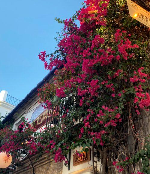 Het leukste van Marbella