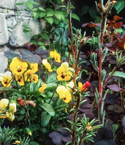 Bloemen plukken en thee drinken bij de Sfeerstal, Nieuwveen
