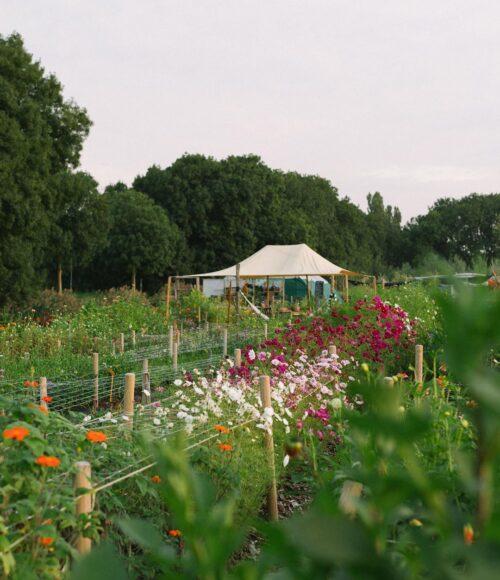 Zaterdag 26 september: Farm to Table dinner bij Lokale Bloemetjes en De Stadsgroenteboer in Amsterdam West