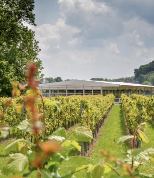 Uniek dineren tussen de wijngaarden bij Wijnrestaurant op het land (Limburg) van 12 september tot 4 oktober