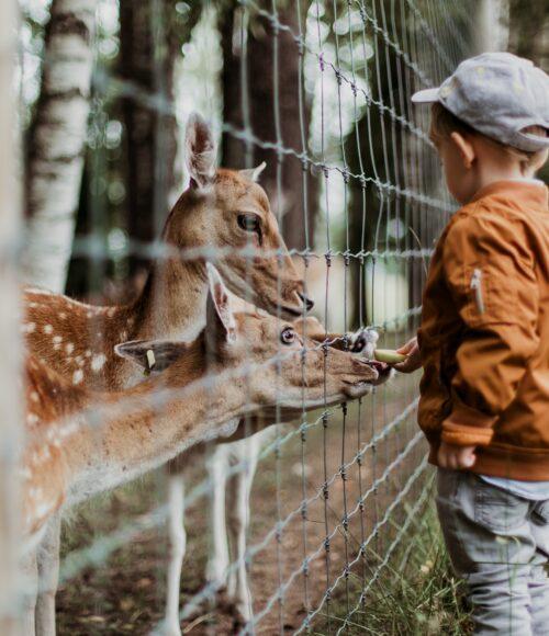 Kinderboerderij -