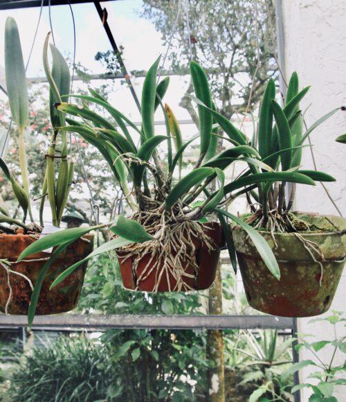 Planten stekken, dat doe je zo