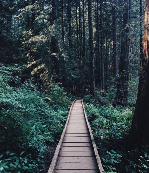 Ommetje: een motiverende stappenteller voor je dosis beweging