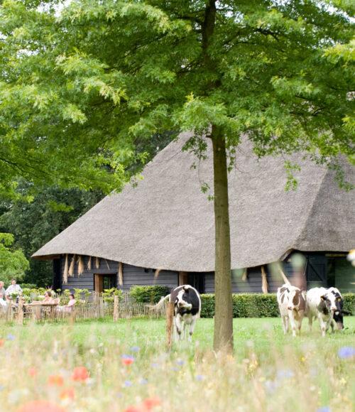 Met z'n allen… Dit zijn (wat ons betreft) de leukste vakantiehuizen in Nederland voor met z'n velen