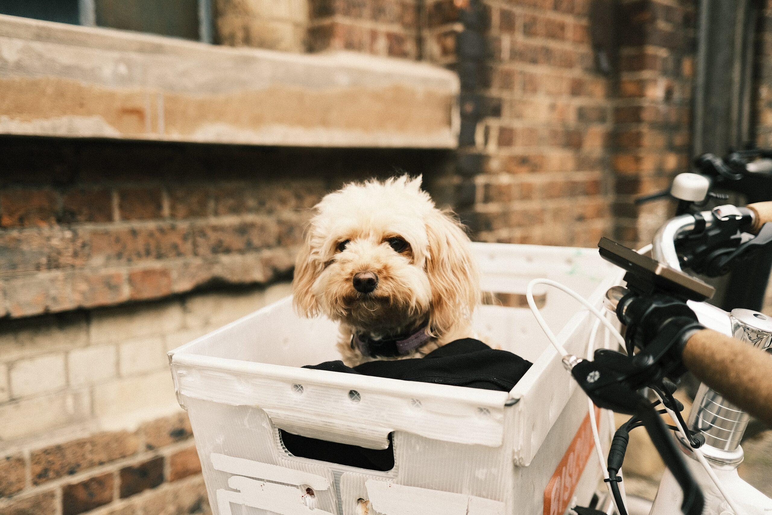 De leukste little escapes (hotels en vakantiehuizen) waar honden welkom zijn